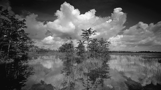 """Big Cypress National Preserve is my home, so I'm partial to its beauty. Wherever I go, photographic opportunities abound."" ‐ Clyde Butcher"