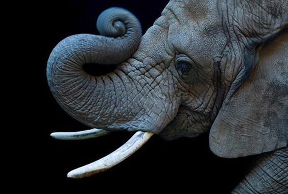 Joel Sartore: Photo Ark